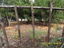 Mandarinenplantage bei San Ramon Foto: Harald Petrul
