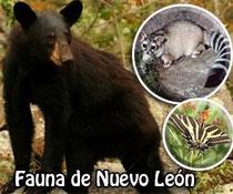 Especies endemicas y migratorias de Nuevo Leon
