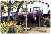園庭の藤棚