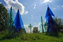 Glasstraße: Gläserner Wald in Regen