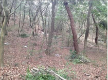 作業中の林床