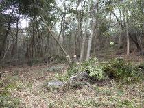 笹刈り後のさんさくの森