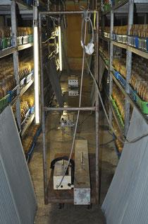 培地の搬入と環境浄化