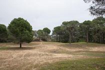 Pinienwald bei Sorgun