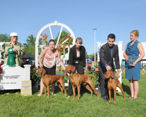 Best Brood Bitch - Vizsla Society Of Ontario 2014