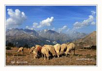 """Les Ecrins. """"Alpage"""". Réf : Alp12 008"""