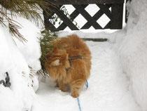 Schnee is schee denkt sich Paulchen