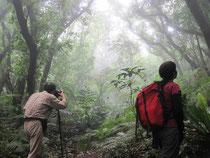 堺が岳手前のヒメツバキ林