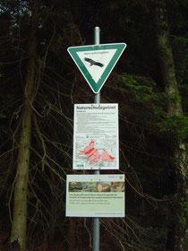 Naturschutz im Wald