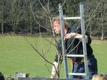 Harald Hamel beim Jungbaumschnitt (Foto: NABU)