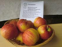 Gravensteiner Apfel ( HU)