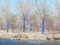 Blue Tree Project, Tingley Beach, Albuquerque