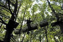 Parcours dans les branches