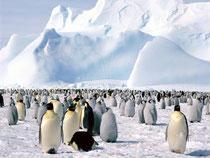 Reisecenter Budeus - Antarktis Kreuzfahrten