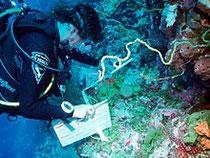 Étude d'un récif corallien de l'archipel des Chagos par un plongeur.