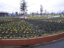 4月3日は雨が降って色鮮やかになりました。
