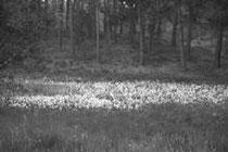 Heidemoor mit Wollgras / Foto: R. Jentek