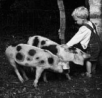Foto: Feuster / NABU  Bunte Bentheimer Schweine