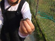 小さなトカゲを捕まえた