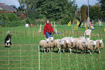 Joy découvre les moutons...