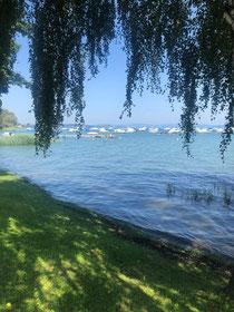 Schöne Bilder vom Bodensee