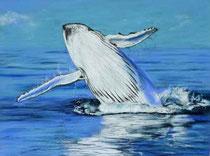 Buckelwal-Walsprung-Wal
