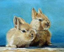 Farbenzwerge-Kaninchen
