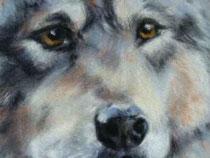 Ausschnitt Wolf ,Pastell auf Velour (c)D.Saul 2012