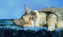 Katze-liegend-Haustier-Pastell