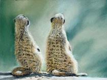 Erdmaennchen-Pastell-Afrika-Tiere