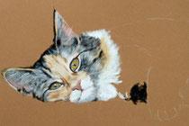 Katze-liegend-Pastell