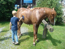 Auch die Pferde brauchen eine Dusche...