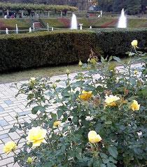 ●神代植物園(11月13日)