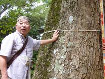 写真は昨年のものです。巨木の計測について説明中