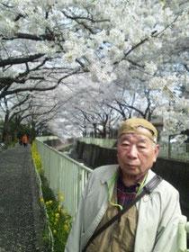 桜がきれいですね