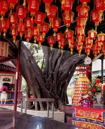 健行路の榕樹 (台湾台中市)