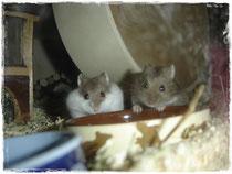 Patty, Halle und Mama