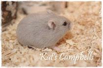 Lou Sulola bei Kat's Campbells
