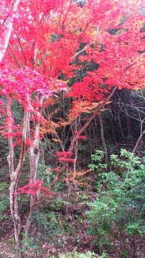 永興寺の紅葉