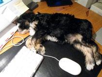 Cima auf dem Schreibtisch!