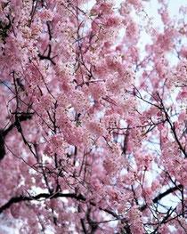 春の感謝イベントスタート!