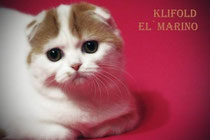 KliFold El ` Marino