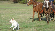 Bewegung-das A und O für jeden Hund