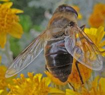 Petite abeille au travail : Giriard'girls, Cathy & James le jeudi 13 juin (Agrandissable)