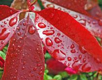 la pluie sur les feuilles : idéal !