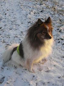 Laddy aus Tirnau (Slowakei)