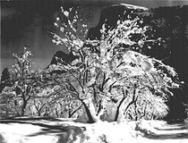 Ansel Adams: Half Dome, Apple Orchard, Yosemite, 1933