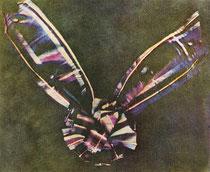 La più antica fotografia a colori conservata fino ad oggi, James Clerk Maxwell, 1861