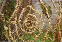 Pflanzenschnur kordeln