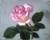 油彩0号 薔薇